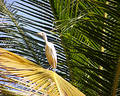 Egret on a palm leaf Royalty Free Stock Photo