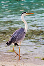 Egret stands at the beach Royalty Free Stock Photography