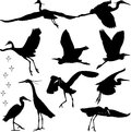 Egrets silhouettes illustration and foot print Royalty Free Stock Photography
