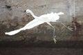Egretta garzetta china xiamen flying Stock Photo