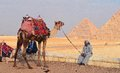 Egypt giza camel near the pyramids egyptian man with a await tourists Stock Photography