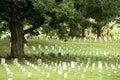 Eichen-Baum in einem Militärkirchhof Lizenzfreies Stockfoto