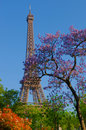 Eiffel Tower and colored trees Royalty Free Stock Photo