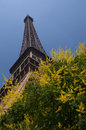 Eiffel tower with spring tree famous paris france Stock Photo
