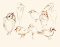 Eight birds pencil artistic sketches illustration illustrations of figures owls herons duck gulls Stock Photos
