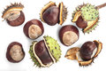 Eight chestnuts ripe isolated on the white background Stock Photos