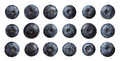 Eighteen Blueberry Royalty Free Stock Photo