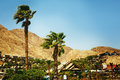 Eilat landscape israel palm trees and mountain view vintage retro toned image selective focus Stock Photography