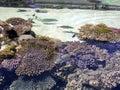 Oceanárium 2005