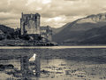 Eilean Donan Castle with Seagull Royalty Free Stock Image