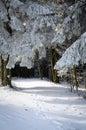 Ein bild des weges mit bahn im schnee am wintermorgen im park Stockfoto