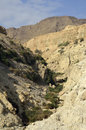 Ein Gedi gorge in Judea desert. Royalty Free Stock Images