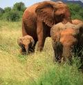 Ein Trio der Elefanten Lizenzfreie Stockfotos