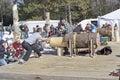 El comenzar de la competencia de two man bucksaw del leñador Imagenes de archivo