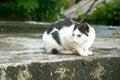 El mirar fijamente negro uno blanco del gato callejero cuidadoso Foto de archivo