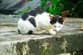 El mirar fijamente negro uno blanco del gato callejero cuidadoso Fotografía de archivo