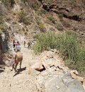 El sod crater ethiopia people asses steep path to bottom crater Royalty Free Stock Photos