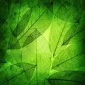 El verde deja el fondo del vintage Fotos de archivo