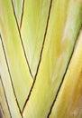 El vástago de una planta tropical Imagen de archivo libre de regalías
