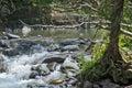 El Yunque creeks, Puerto Rico. Royalty Free Stock Photo