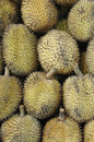 Elai, tropical fruits like durian fruit Royalty Free Stock Images