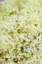 Elderberry Flowers Detail