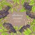 Elderberry vector frame
