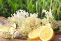 Elderflower liqueur tasting with fresh and lemon Stock Image