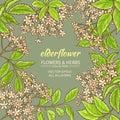 Elderflower vector frame