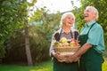 Elderly couple and apple basket. Royalty Free Stock Photo