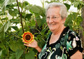 Elderly lady with sunflower Royalty Free Stock Image