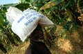 Elderly man carrying supply sack, Burundi. Royalty Free Stock Image