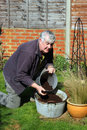 Elderly man filling container with compost Stock Photos