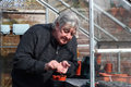 An elderly man in a greenhouse sowing seeds into pots in the springtime Royalty Free Stock Photography
