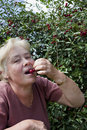 Elderly woman collects  berries Royalty Free Stock Photo