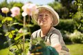 Elderly woman gardening in backyard wearing sun hat looking at flowers garden outdoors Stock Images