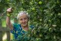 An elderly woman near Apple tree Royalty Free Stock Photo