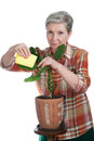 Elderly woman rubs leaves of the plant cheerful Stock Images