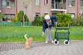 Elderly woman with walker and cat Royalty Free Stock Photos