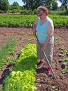 Elderly woman weeding senior vegetables in garden with hoe Stock Photography