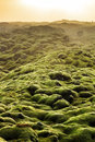 Eldhraun Moss Landscape