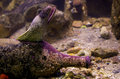 Electric eel moray inside a bottle on sea floor Stock Photos