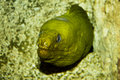 Electric eel in rock Royalty Free Stock Photo