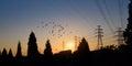 Electric power pylon at dawn with flock birds Stock Photo