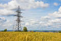 Electrical powerlines and wheat field in summer day Royalty Free Stock Photography