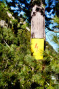 Electricity Warning Symbol on a pine tree Royalty Free Stock Photo
