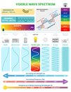 Electromagnetic Waves: Visible Wave Spectrum. Vector illustration diagram with wavelength, frequency and wave structure Royalty Free Stock Photo