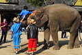 Elefant als Touristenattraktion, China Stockbilder