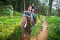 Elefant-Trekking Khao Sok im Nationalpark Stockbild