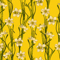 Elegance Seamless pattern with flowers daffodils, vector floral illustration in vintage style. Yellow background